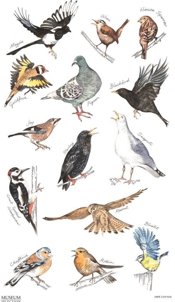 british-birds-tt